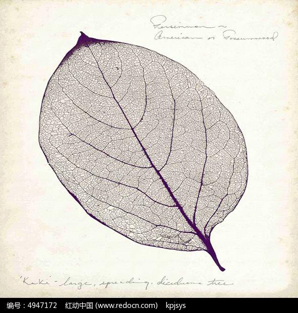 淡雅欧式树叶装饰画设计图片