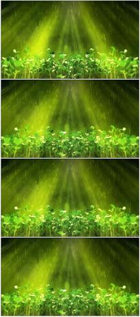 雨中绿色植物发芽生长视频素材