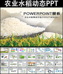 水稻粮食农业丰收大米生产加工PPT幻灯片模板