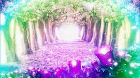 多彩树林视频素材