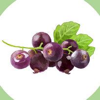 蓝莓原创水彩风手绘食品商业插画