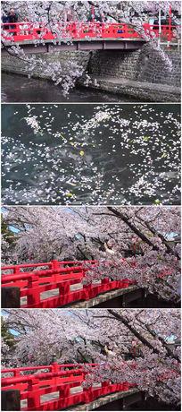 樱花飘落水中视频素材