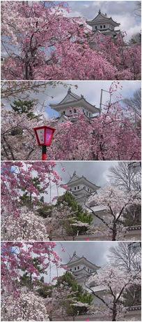 樱花山景区唯美浪漫视频素材