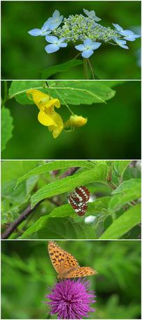 雨后各种小花与蝴蝶视频素材 mov