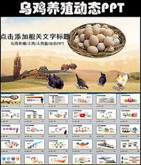 绿色生态乌鸡养殖乌鸡蛋加工PPT模板