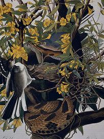 欧美复古花鸟装饰画设计