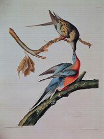 欧美复古小鸟装饰画设计