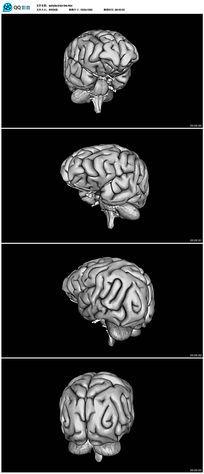 三维剖析人类大脑生物医学视频素材