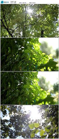 唯美春天里大自然风景绿树阳光视频素材