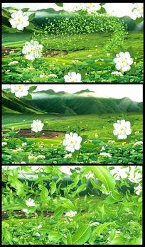茉莉花茶园风光设计绿茶视频 mov