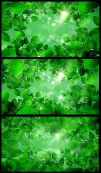绿叶绿色森林高清无缝循环视频素材