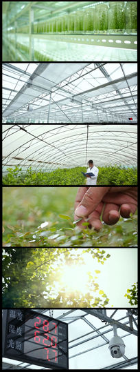 农业蔬菜大棚现代农业视频素材