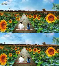 蓝天白云下的向日葵情侣背景视频