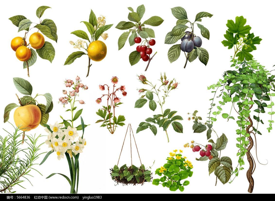 植物 手绘 绿植