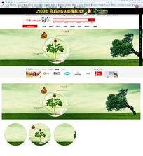 创意三七产品绿色banner海报 PSD