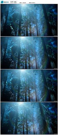 苍天大树视频素材