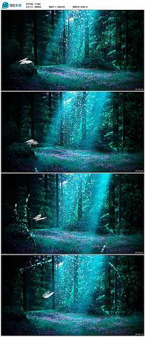 魔法森林童话背景视频 mp4