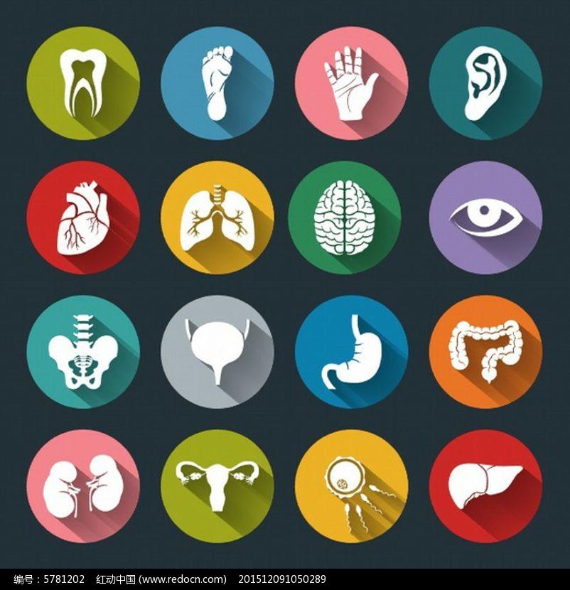 人体器官扁平图标图片