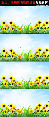 春天来了风景向日葵草地蝴蝶动态视频素材下载 mov