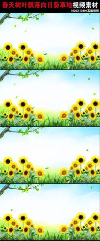 树叶飘飘向日葵春天来了风景视频素材下载 mov
