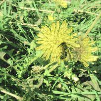 大自然花卉昆虫拼贴装饰画
