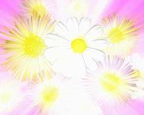 视频用小菊花旋转led视频素材