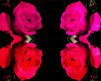 晚会用红牡丹玫瑰花朵led视频素材