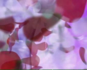 晚会用玫瑰花瓣循环播放LED视频素材