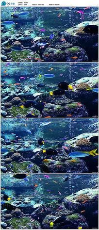 海洋鱼类热带鱼视频