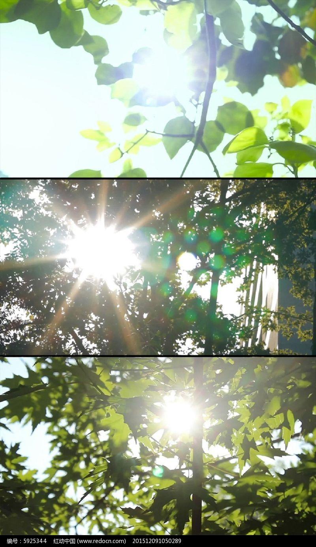 高清实拍 高清素材 树间阳光 阳光透过树梢 枝头 树梢阳光 光斑 树叶