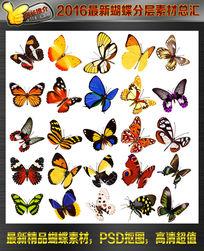 高清蝴蝶抠图