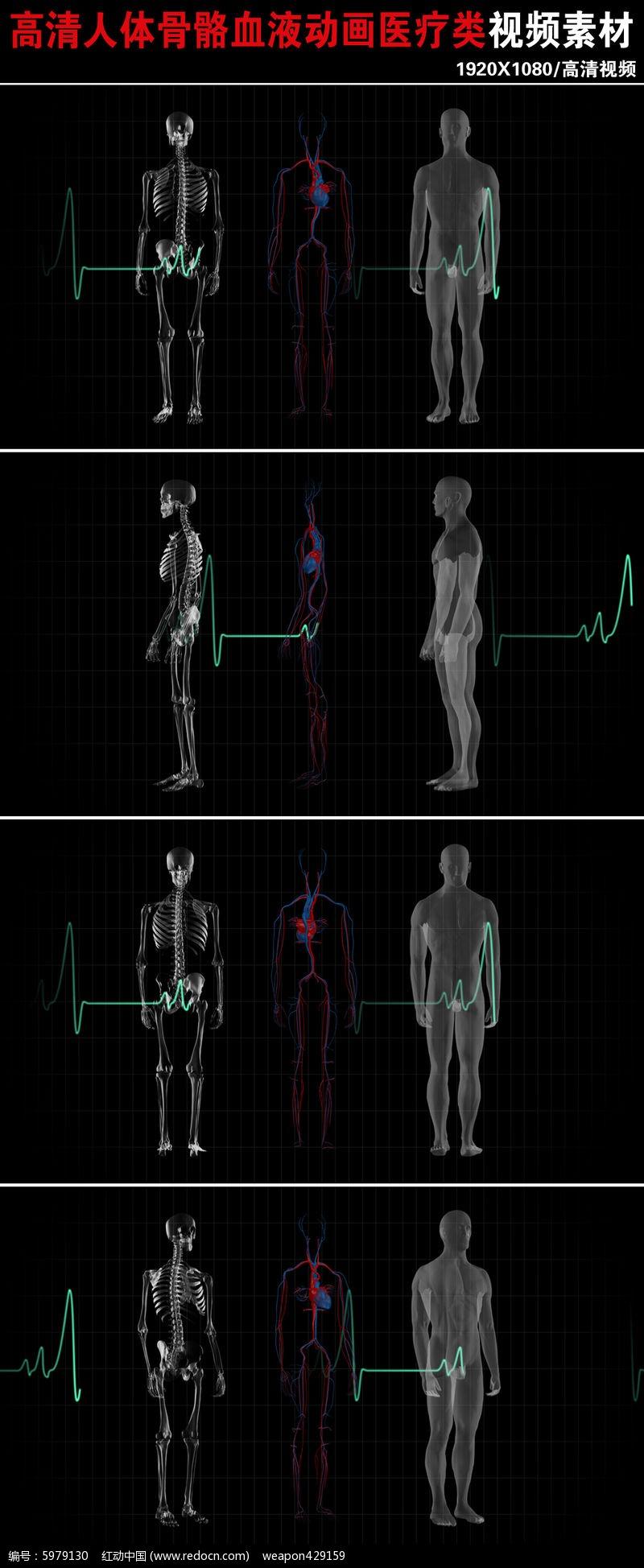 人体写真视频高清下载_人体骨骼血液动画心电图医疗视频素材下载图片