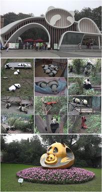 4k超清成都大熊猫基地实拍视频素材
