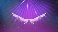 天使翅膀视频素材 mov