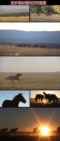 草原上奔跑的马群实拍视频素材
