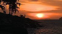 海边黄昏椰树剪影高清实拍视频素材