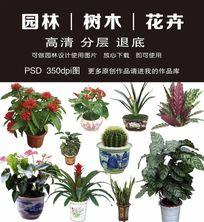 园林设计花卉PSD分层素材