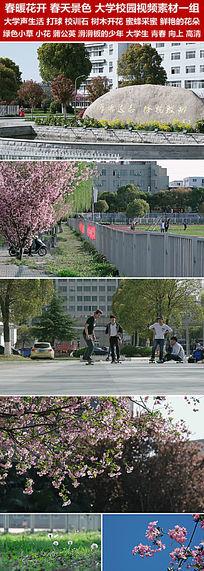 春暖花开春天景色大学校园大学生桃花视频素材