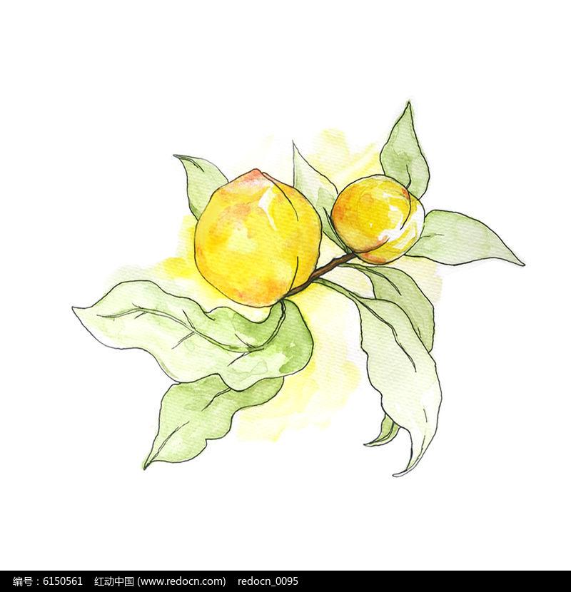 黄桃手绘水彩图片