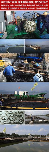 高清实拍食品企业宣传片水产养殖网箱养鱼水产加工视频素材 mov