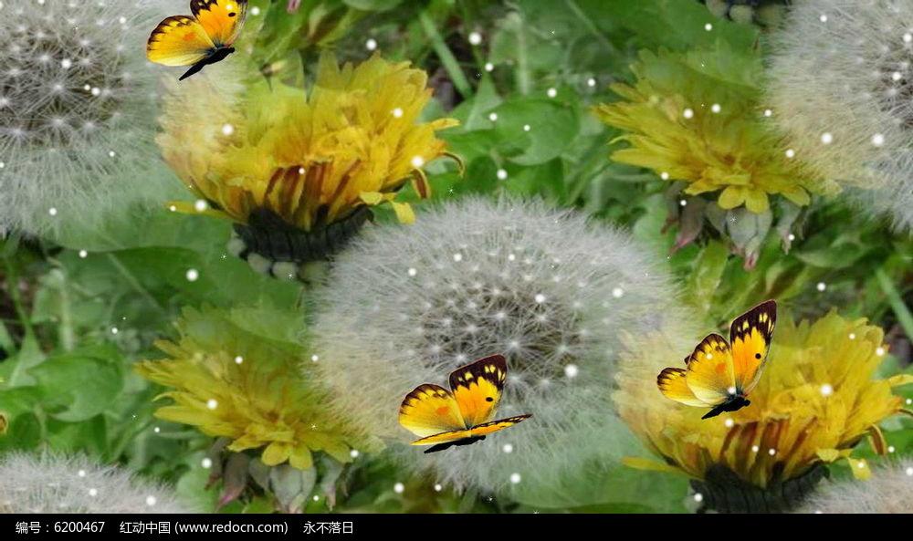 蝴蝶在花丛中飞舞视频