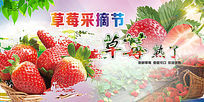 草莓采摘节