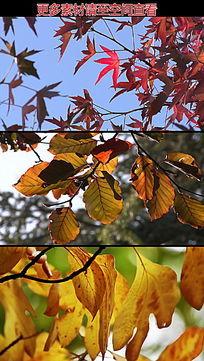 秋天枯叶枫叶高清实拍视频素材