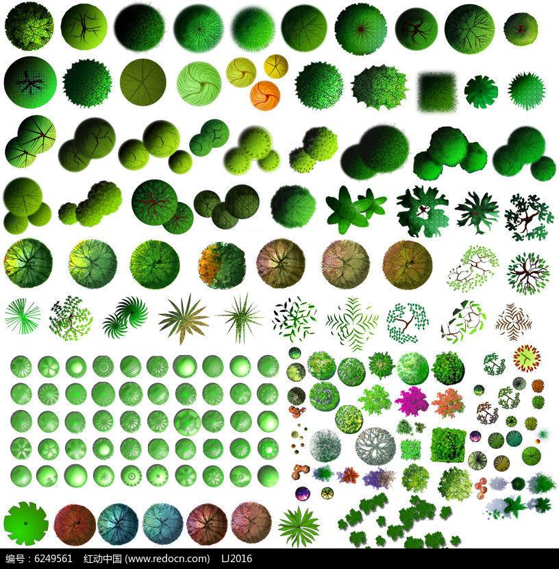 乔木灌木丛植物平面素材psd