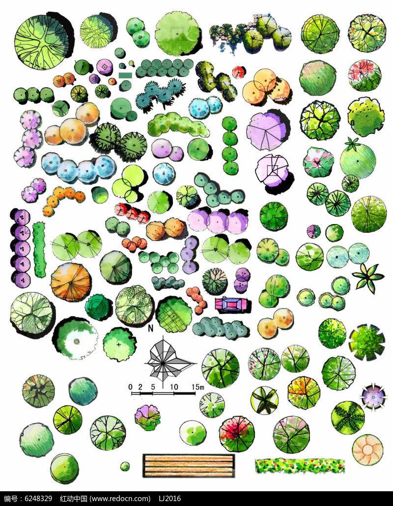 绿篱手绘效果图