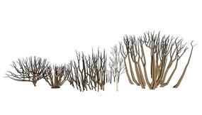 多款枯树SU模型