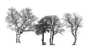 黑白枯树SU模型