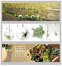 多肉植物淘宝首页广告