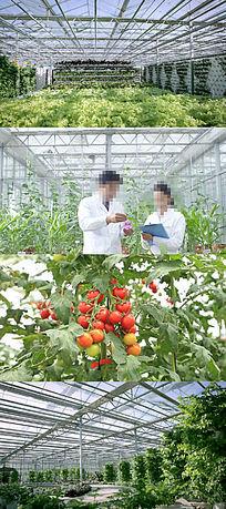 现代农业大棚蔬菜种植农业视频