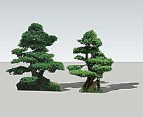 2株造型树草图模型 skp